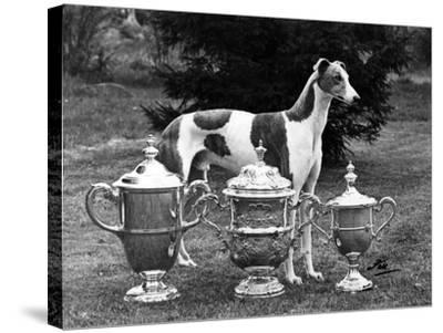 Fall, Crufts, 1956, Greyh'D-Thomas Fall-Stretched Canvas Print