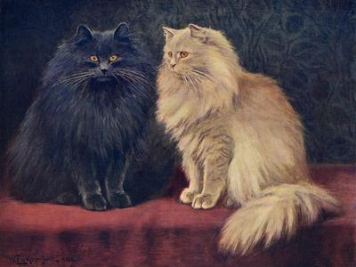 Blue, Cream Persian Cats-W^ Luker-Stretched Canvas Print