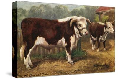 Hereford Bull and Cow 1912--Stretched Canvas Print