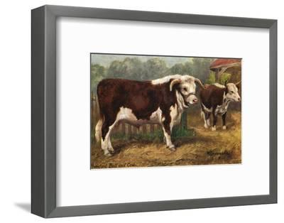 Hereford Bull and Cow 1912--Framed Giclee Print