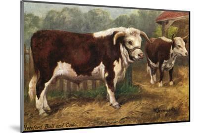 Hereford Bull and Cow 1912--Mounted Giclee Print