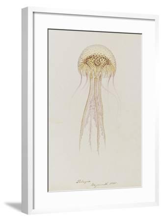 Pelagia, Weymouth, 1853: Pelagia Noctiluca: Jellyfish-Philip Henry Gosse-Framed Giclee Print