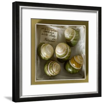 Philippine Land Snails from the Linter Collection--Framed Photographic Print