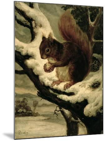 A Red Squirrel Eating a Nut-Basil Bradley-Mounted Giclee Print