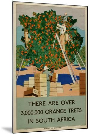 Orange Trees in South Africa, from the Series 'Summer's Oranges from South Africa'-Guy Kortright-Mounted Giclee Print