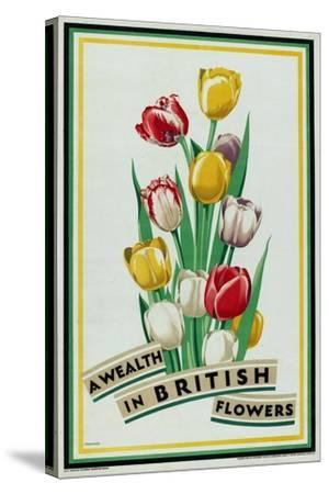 A Wealth in British Flowers, from the Series 'British Bulbs for Home Gardens'- Fawkes-Stretched Canvas Print