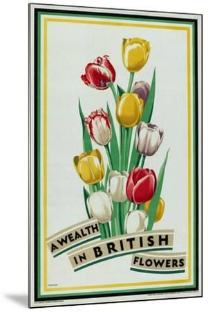 A Wealth in British Flowers, from the Series 'British Bulbs for Home Gardens'- Fawkes-Mounted Giclee Print
