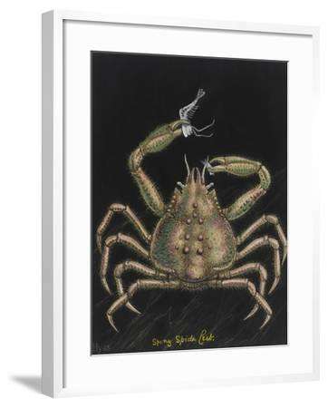 Spiny Spider Crab-Philip Henry Gosse-Framed Giclee Print