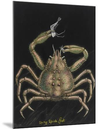 Spiny Spider Crab-Philip Henry Gosse-Mounted Giclee Print