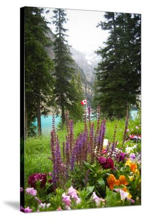 Banff Flowers In National Park Nature Photo Poster--Stretched Canvas Print