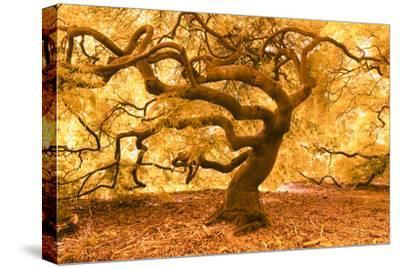 Japanese Maple 2-Moises Levy-Stretched Canvas Print