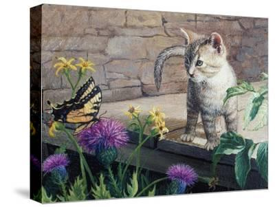 Kitten and Butterfly-Kevin Dodds-Stretched Canvas Print