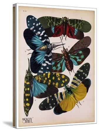 Insects, Plate 8--Stretched Canvas Print