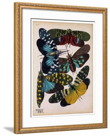 Insects, Plate 8--Framed Giclee Print