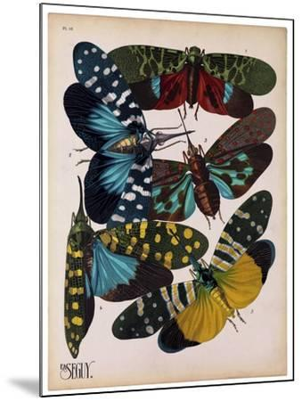 Insects, Plate 8--Mounted Giclee Print