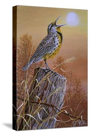 Meadowlark Painting-Jeff Tift-Stretched Canvas Print