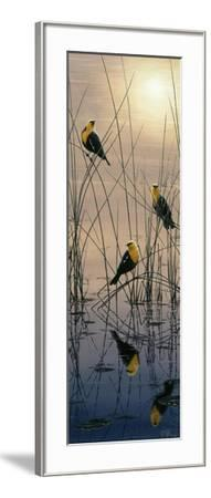 Morning Call - Yellow Headed Blackbirds-Jeff Tift-Framed Giclee Print