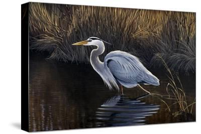 Making Strides - Great Blue Heron-Wilhelm Goebel-Stretched Canvas Print