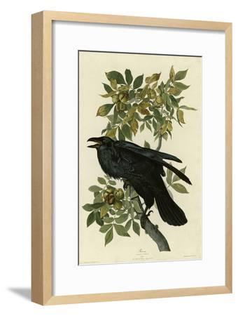 Raven--Framed Giclee Print