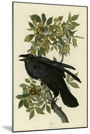 Raven--Mounted Giclee Print