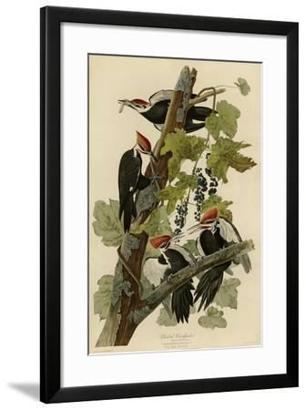 Pileated Woodpecker--Framed Giclee Print