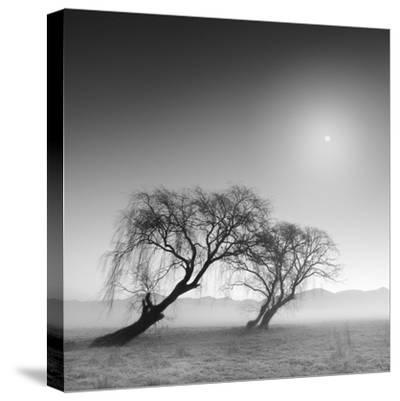 Reverencia-Moises Levy-Stretched Canvas Print