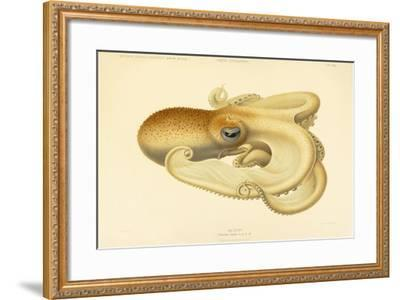 Octopus - Die Cephalopod - 1915 - Plate 75--Framed Giclee Print