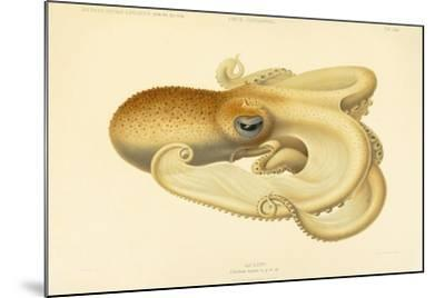 Octopus - Die Cephalopod - 1915 - Plate 75--Mounted Giclee Print