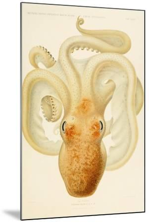 Octopus - Die Cephalopod - 1915 - Plate 76--Mounted Giclee Print