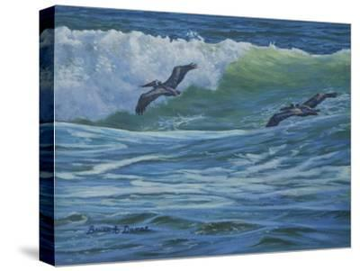 Pelican Skimmers-Bruce Dumas-Stretched Canvas Print