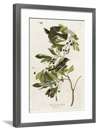 Small Green Crested Flycatcher--Framed Giclee Print