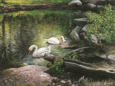 Swan Song-Kevin Dodds-Framed Giclee Print