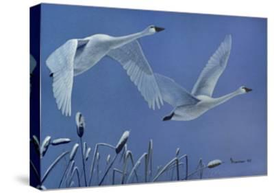 Swans-Rusty Frentner-Stretched Canvas Print