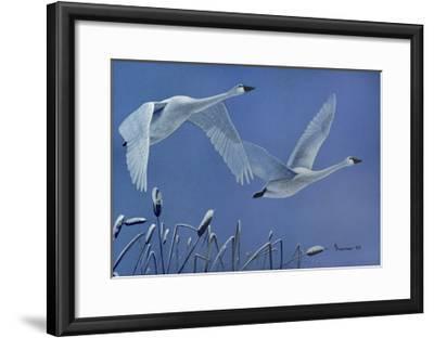 Swans-Rusty Frentner-Framed Giclee Print