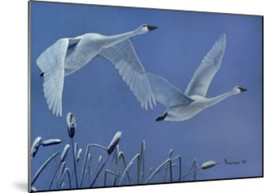 Swans-Rusty Frentner-Mounted Giclee Print
