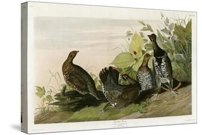 Spotted Grouse--Stretched Canvas Print