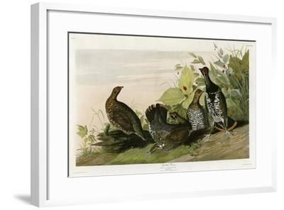 Spotted Grouse--Framed Giclee Print
