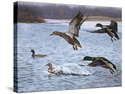 Spring Arrivals-Rusty Frentner-Stretched Canvas Print