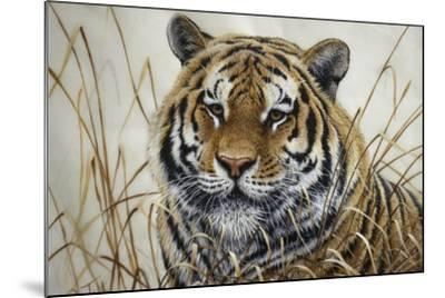 Tiger-Jeff Tift-Mounted Giclee Print