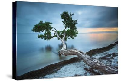Water Tree 10 Color-Moises Levy-Stretched Canvas Print