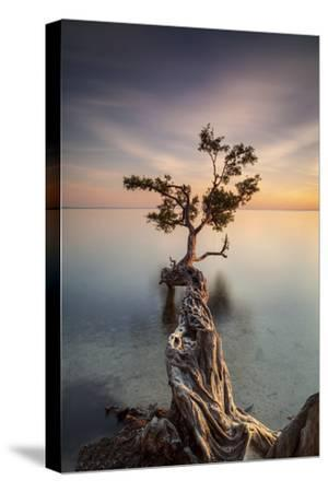 Water Tree III-Moises Levy-Stretched Canvas Print