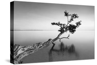 Water Tree IX-Moises Levy-Stretched Canvas Print