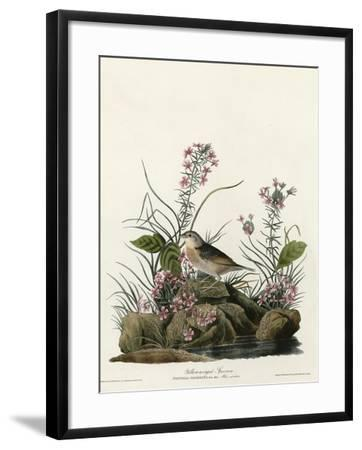 Yellow Winged Sparrow--Framed Giclee Print