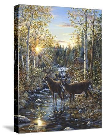 Whitetail Deer-Jeff Tift-Stretched Canvas Print