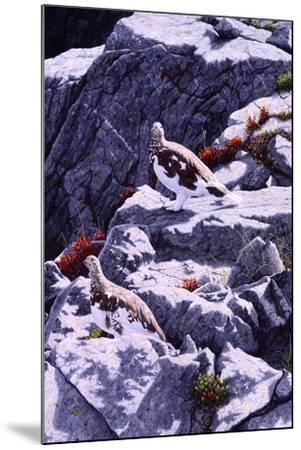 White-Tailed Ptarmigan-Jeff Tift-Mounted Giclee Print