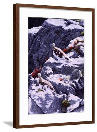 White-Tailed Ptarmigan-Jeff Tift-Framed Giclee Print