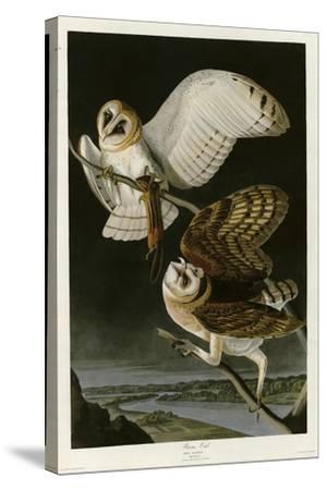 Barn Owl--Stretched Canvas Print