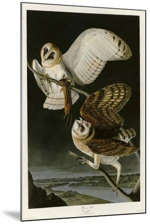 Barn Owl--Mounted Giclee Print