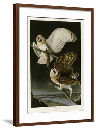 Barn Owl--Framed Giclee Print