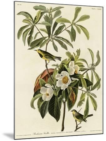 Bachmans Warbler--Mounted Giclee Print